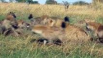Most CRAZIEST Animal attacks Caught On Camera #2- Amazing Wild Animal Attacks