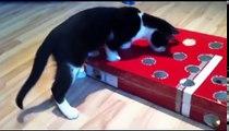 Fummelbrett Katz und Maus Selber bauen Cat Activity Fun Board