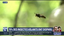 """""""Bientôt, on n'entendra plus une mouche voler."""" Pourquoi les insectes volants disparaissent ?"""