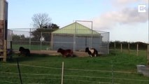 Adorable Ponies Can't Stop Going Round In Circles / Pony Merry Go Round