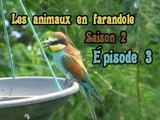 Les animaux en farandole: saison 2: épisode 3