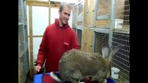 Intelligent Technology Smart Farming Rabbits Breeding USA Australia India Germany Russia