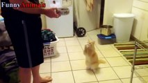 Funny Dogs and Cats Begging For Food - Funny Dog & Cat Videos 2017