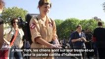 NY: Les chiens se font beaux pour la parade canine d'Halloween