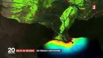 Etats-Unis : le Golfe du Mexique, un paradis empoisonné par les pesticides