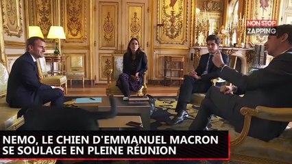 Emmanuel Macron : Quand son chien Nemo se soulage en pleine réunion à l'Elysée (Vidéo)