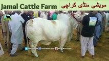 723 || Cow mandi 2018/2019 Karachi Sohrab Goth || Jamal Cattle Farm Video || Amazing Qurbani Animals