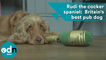 Rudi the cocker spaniel wins Britain's best pub award