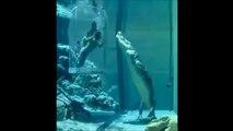 Nager avec des crocodiles... Experience terrifiante et incroyable