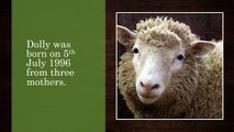How Dolly Sheep Was Cloned? | Cloning | Scientific | By DailyDot