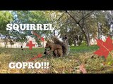 Vlogger Documents Hungry Squirrel Stealing His GoPro