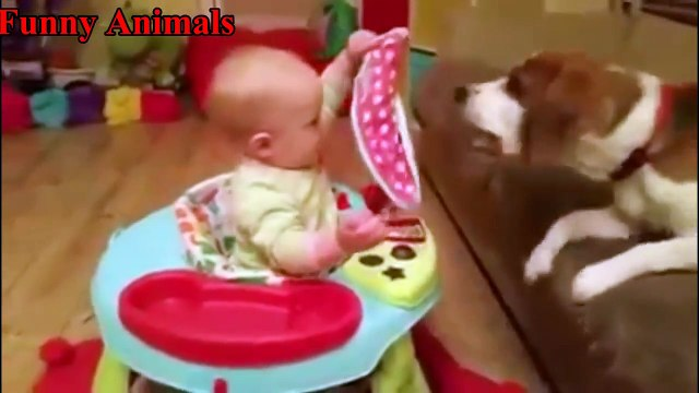 Beagle Loves Baby - Best Baby and Beagle Dogs Playing Video Compilation - Dogs and Baby Videos