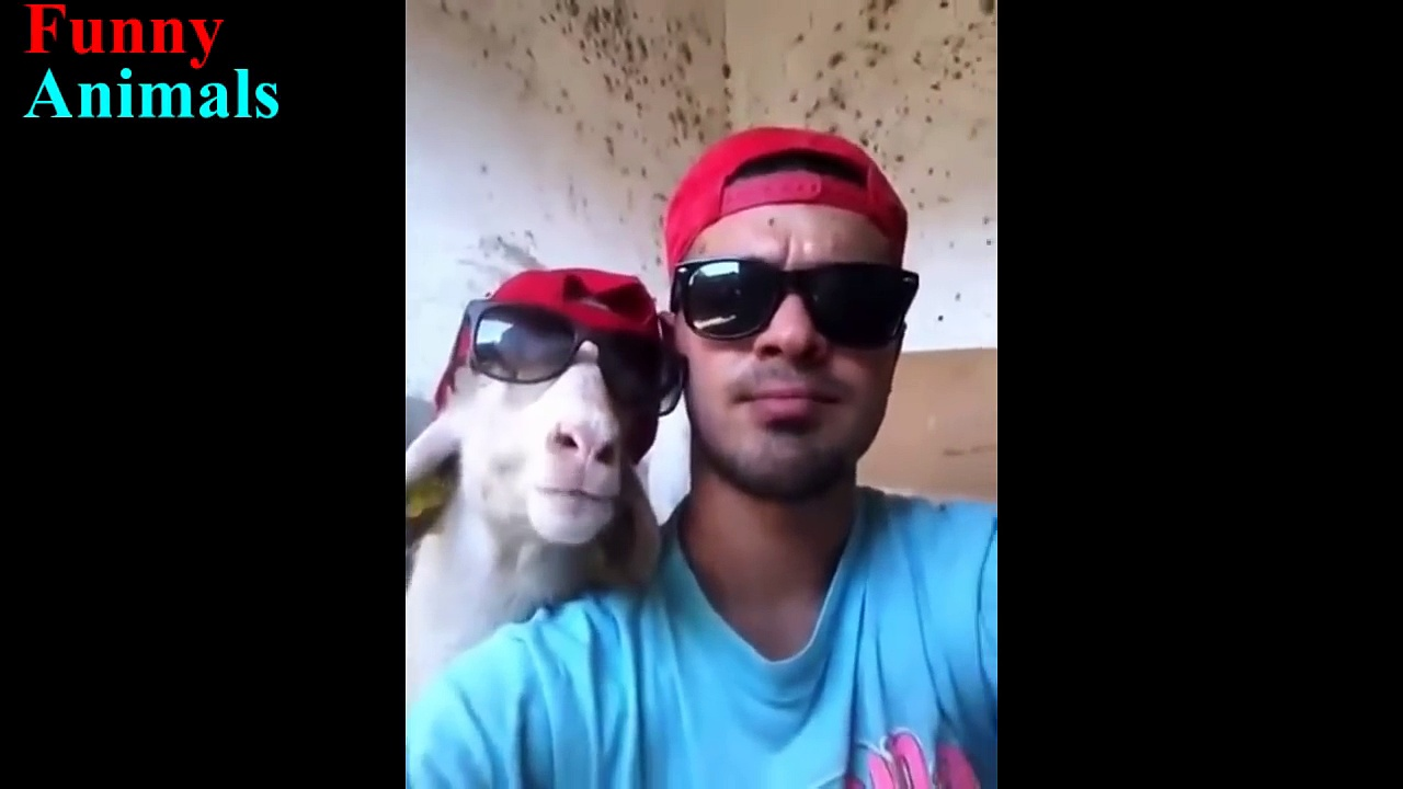 Best and Funniest Goats Video – Funny Goats Compilation