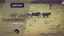 TOUROS BRAVOS