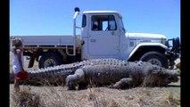 Les plus gros animaux du monde. Dingue...
