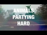Animals Dancing in an Adorable Way