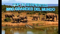 SERPIENTES GIGANTES: Las Serpientes mas Grandes del mundo