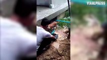 Puppies Rescued From Under Flooded Building