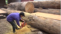 LARGEST Tree Sawmill Cutting Down - video dailymotion