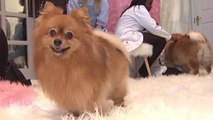 Fluffytorium Petting Zoo Celebrates the Fluffiest Pets in the World