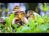 Best Cute Baby Animal Videos, Super Funny Animals, Cutest Pets, Lovely Animals