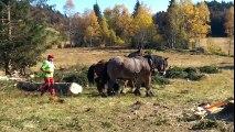 Savoie/St-François-de-Sales : le débardage au cheval, respectueux de l'environnement