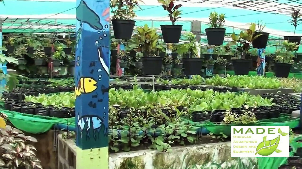 MADE Growing Systems Aquaponics Philippines, September new Update
