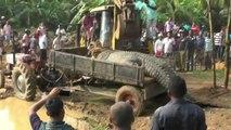 Un crocodile géant de près d'une tonne sauvé par ds habitant du Sri Lanka et remis dans la rivière