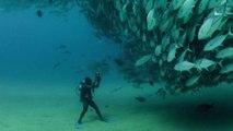 """Un plongeur filme une """"tornade"""" de thons au fond de la mer... Impressionnant"""