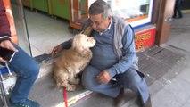 20 Gündür Kayıp Köpekle Sahibinin Duygulandıran Kavuşan Anı