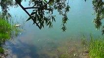 На ОЗЕРЕ. рыбалка на поплавочную удочку, Рыбалка. Ловля карася, карпа на поплавочную удочку. fishing