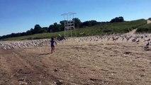 Il ne fallait pas embeter les mouettes sur la plage. Surtout quand elle sont nombreuses