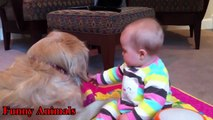 Golden Retriever And Baby Are Best Friend - Beautiful Friendship - Golden Retriever Loves Baby