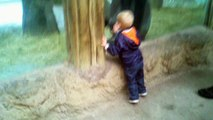 Un gamin et un jeune gorille jouent à cache-cache dans un zoo... Trop mignon
