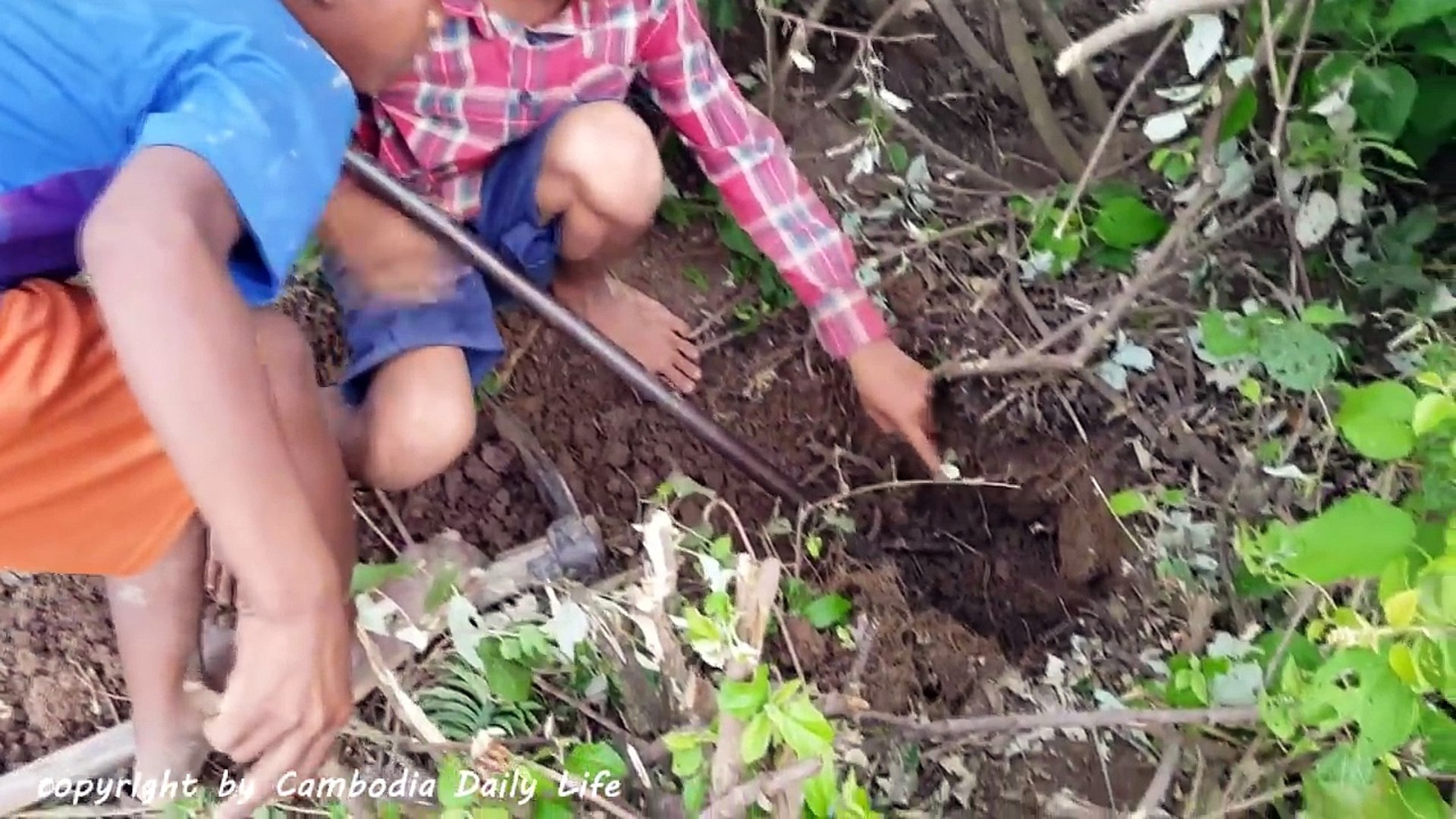 Amazing Three Brothers Catch Giant Anaconda by Digging Hole - How to Catch Snake by Diggin