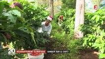 Réchauffement climatique : au Mexique, la production de café en péril