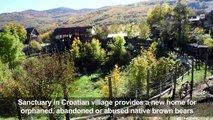 Croatian village gives shelter to abandoned bears