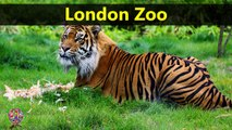 Top Tourist Attractions Places To Visit In UK-England | London Zoo Destination Spot - Tourism in UK-England