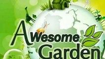 How to grow Gandhraj care and tips || gardenia (organism classification)