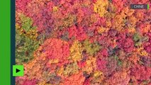 [Actualité] Découvrez toutes les couleurs de l'automne vues d'en haut