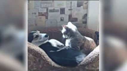 These Cats and Dogs Are Best Friends Forever