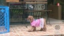 Sans Frontières - Pékin: Le business florissant des animaux de compagnie