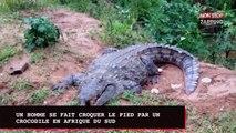 Un homme se fait croquer le pied par un crocodile (vidéo)