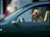 pub - biere - heineken - voiture conduite par le chien