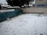 Bebel & Moogly dans la neige