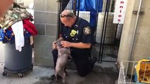 Puppy Is Sad At Shelter, Until She Reunites With The Firefighter Who Saved Her From Abuse