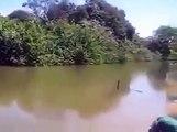 Quand des piranhas affamés sautent sur un poisson... impressionnant !