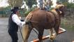 Foire aux chevaux et aux poulains