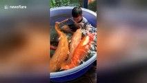 Toddlers splashing around in pool filled with koi carp