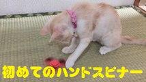 初めてのハンドスピナー Cat and fidget spinner